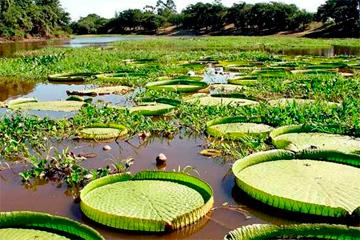 Esteros de Ibera